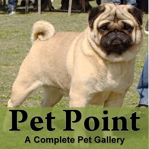 Pet Point Logo